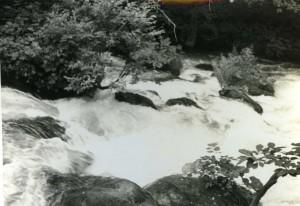 奥入瀬渓流8