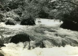 奥入瀬渓流6