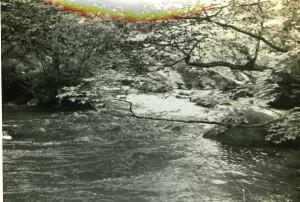 奥入瀬渓流7