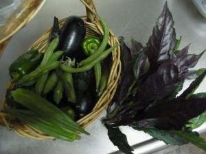 2013.7.7.野菜の収穫